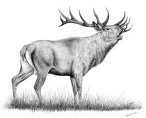 per jelen-lesni